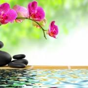 LIFE IMPACT Healing Package